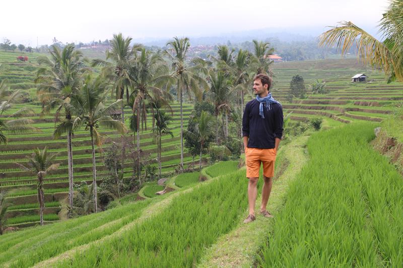 Jatiluwih - największy taras ryżowy wIndonezji